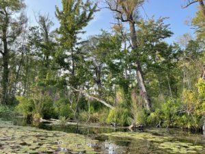 Trees at Otter Lake