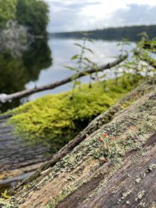 Plants on a log