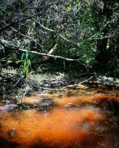 Red-tinged water in shallow area