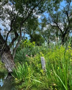 Flora alongside canal