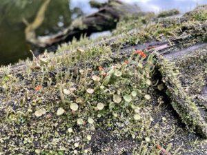 Tiny plants on a log