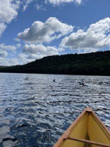 Loons on North Lake