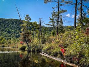 Fall color at Labrador Pond